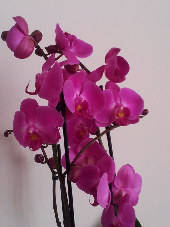 foto flori 120