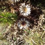 Flori de spin