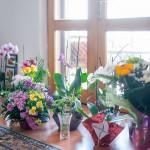 Florile minunate din cabinet